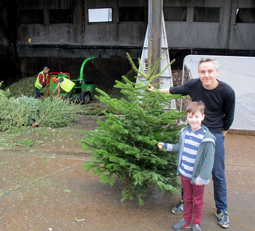 Residents recycling their christmas trees